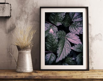 Purple Leaves Print | Magical Close up Plant Leaves Detail Photography