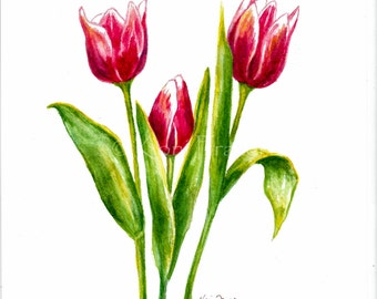 Tulips watercolor painting, spring flowers
