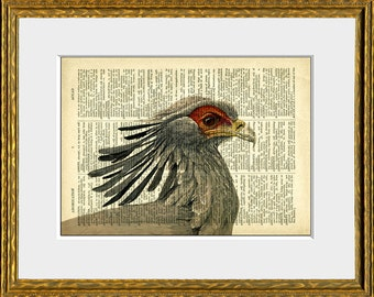 SECRETARY BIRD recycled book page art print - an upcycled antique dictionary page with retooled antique bird illustration - home decor