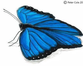 Blue Morpho - Insect Print