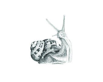 Printable Snail, hand drawn, pen and ink, print up to A2