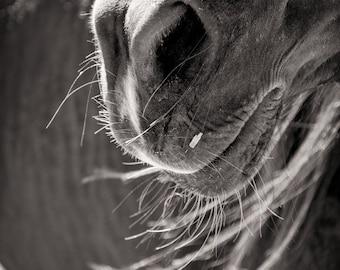 Horse photo, muzzle closeup, equine photo, western art, ranch decor, cowboy art, rustic wall art, living room decor, rural art, sepia art