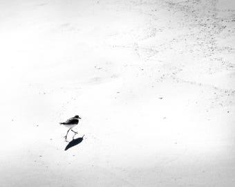 Black and white photo of bird on the beach