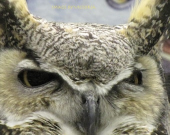 Owl Medicine  Magical Birds of Prey-  The Eyes Have It - Nature Fine Art Photograph