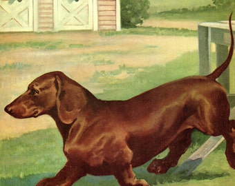 The DACHSHUND Print - 1950's Book Print Dog Illustration by Wesley Dennis