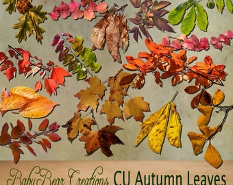 Commercial Use Autumn Leaves