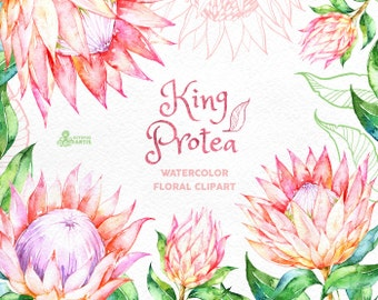 King Protea. Watercolor floral Clipart, wedding invitation, floral, tropical bridal, african, greetings, diy clip art, flowers, pink, frame