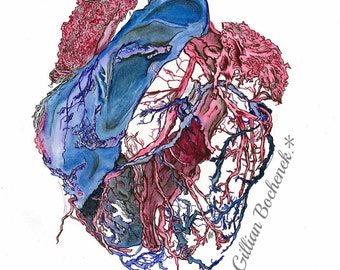 Arteries and Veins Around the Heart