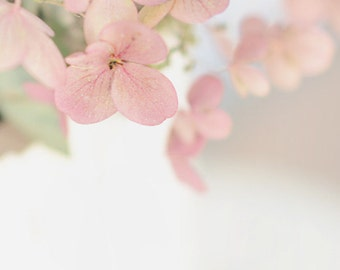 pretty  in pink hydrangea-flower photography - flower photo- cottage garden - Original fine art photography prints - FREE Shipping