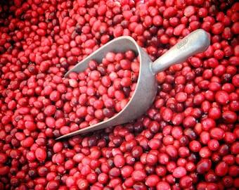 Cranberry Harvest Photograph - Nature Fruit - Kitchen Art - Wall Decor - Farmers Market Art - Cranberry Photograph - Nature Photography