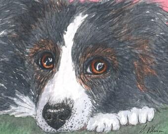 Border collie dog 8x10 art print - careful consideration