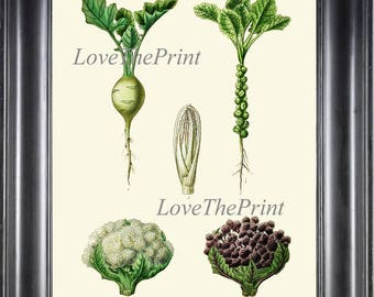 Herb Vegetable Garden Art Print HJ10 Botanical Antique Beautiful Cauliflower White Purple Plant Green Nature Home Room Wall Decor to Frame