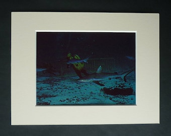 Vintage Jacques-Yves Cousteau Diving Print, Blacktip Reef Shark Deep Sea Diver Gift Sealife Wall Art Retro Scuba Dive Underwater Photography