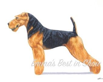 Welsh Terrier Dog - Archival Fine Art Print - AKC Best in Show Champion - Breed Standard - Terrier Group - Original Art Print