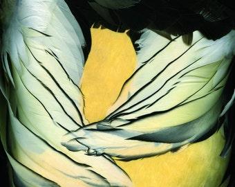 Winter Merganzer - Signed Fine Art Photograph
