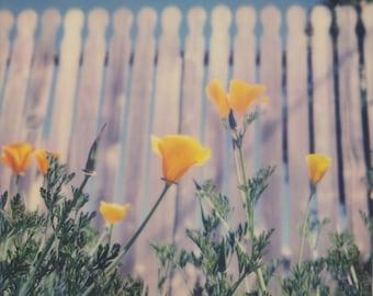 California Poppies   Polaroid Print   Flowers   Fine Art Photography