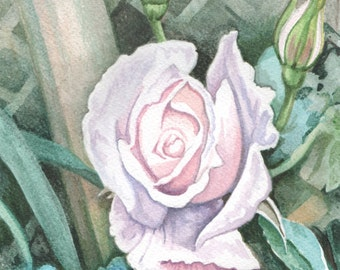 White Rose, collectable watercolor painting, ORIGINAL art gift, watercolor painting, FREE shipping