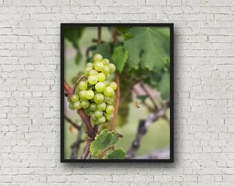 Grapes and Bee Print / Digital Download / Fine Art Print/ Wall Art / Home Decor / Color Photograph / Nature Print / Nature Photography