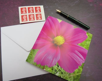 Hot Pink Cosmos Limited Edition Greeting Card Left Blank for Personal Message
