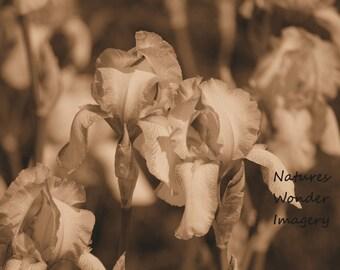 Irises Sepia - Wall Art Print, Instant Digtal Download, Printable Photo, Digital Photo, Photography, Digital, Sepia Photography, Sepia
