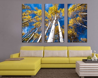 Aspen Trees and Blue Skies. 3 Panel Split (Triptych) Canvas Print. Forest, Nature photography for wall decor, interior design. Yellow leaves