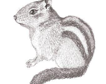 "Chipmunk Graphite Drawing Art Print 5x7"""