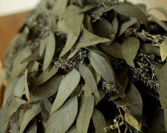 Bunch of Preserved Kiwi Seeded Eucalyptus, green eucalyptus, green-gray eucalyptus, seeded eucalyptus