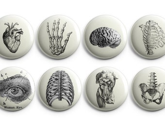 """Vintage anatomy buttons, Anatomy fridge magnets - 1.25"""" buttons - coworker gift, vintage heart - B004"""