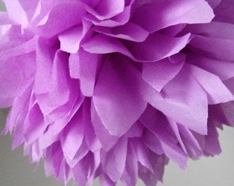 Lilac ... 1 Pom