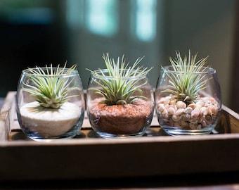 3 Tiny Terrarium
