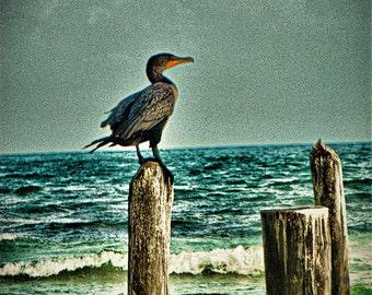 Sea Pillars - Photography