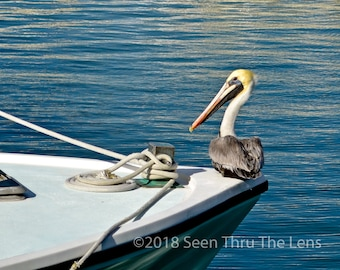Pelican Hitching a Ride - Photographic Print