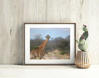 Wildlife Photography, Giraffe Print, Wildlife Print, Baby Giraffe, Nature Photography, African Wall Art, Giraffe Photography, Nursery Decor