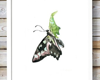 Butterfly cocoon watercolor- butterfly painting - Art Print -black ink - cocoon art - insect illustration - butterfly drawing