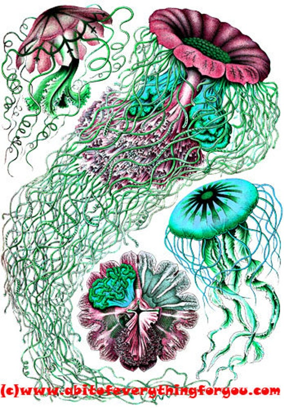 green red jelly fish sealife printable art print jpg png ocean animals Digital instant Download Image graphics living room home beach decor