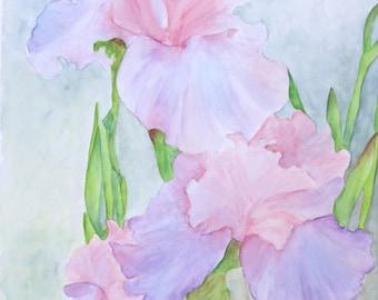 Unnamed Irises