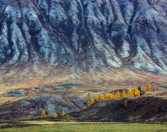 Altai Mountain Ptint, Landscape Photography, Altai Russia, Wall Art, Minimalist Art Print, Autumn Trees Decor, Nature Photography,Larch Tree