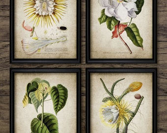 Flower Print Set of 4 - Yellow - White - Vintage Botanical - Flower Decor - Printable Art - Set Of Four Prints #177 - INSTANT DOWNLOAD