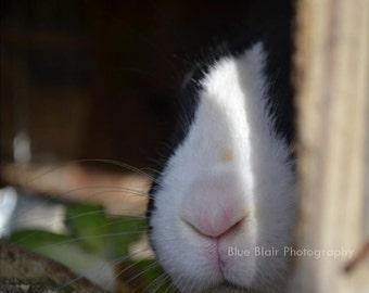 Bunny Nose print