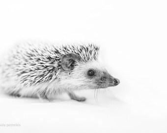 Hedgehog gift - 6x9 inches fine art photo print - Small African hedgehog print- Animal lover gift - Nursery wall art - Woodland gift