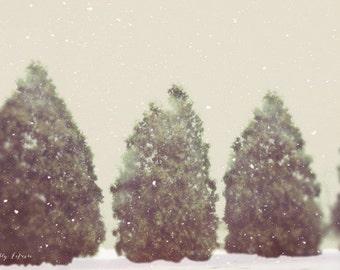 snowing, winter, trees, fine art photography