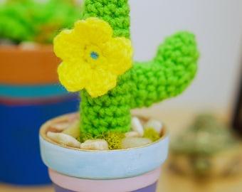 Cute Saguaro Cactus