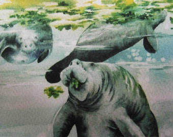 Manatees ACEO 933 manatees feeding Watercolor print Florida watercolorsNmore Endangered species collectible