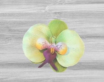 Large Green Phalaenopsis Orchid Hair Clip