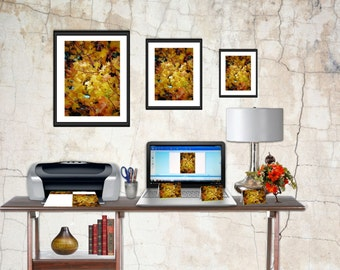 Stock Photo, Stock Photo Download, Stock Photo Fall Leaves, Colors of Fall Download
