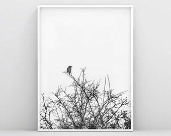 Bird Prints, Black and White Bird Wall Decor, Bird Print Art, Bird Wall Print, Animal Wall Poster, Bird on Tree, Nursery wall art, Nordic
