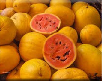 Golden Midget Heirloom Watermelon Seeds Non-GMO Naturally Grown Open Pollinated Gardening