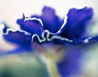 flower photography flower photograph fine art photography nature wall art print wall decor, Blue Violet