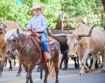 longhorn cattle drive print