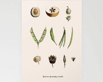 Botanical card, Handmade greetings card, Greetings card, nature card, handmade  birthday card, personalised card, botanical illustration,